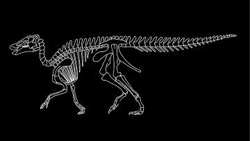 Скелет эдмонтозавра
