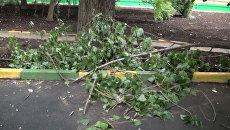 Сухие деревья угрожают безопасности жителей в московских дворах