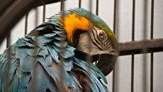 «Оранжерея дивных птиц» на ВВЦ