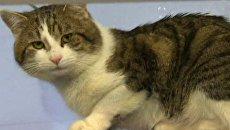 Бывший бездомный кот Ларри будет бороться с грызунами на Даунинг Стрит