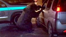 Разъяренная медведица весом 120 килограммов набросилась на людей