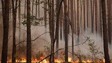 Природные пожары в России