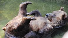 В Московском зоопарке. Архивное фото