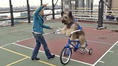 Пес Норман крутит педали велосипеда и катается на самокате