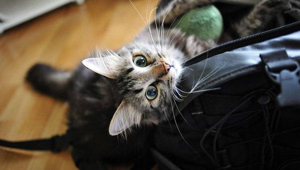 Как влияет на человека кот