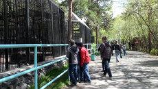 Опасная уборка, или Как сотрудница зоопарка Новосибирска стала жертвой ягуара