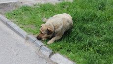 Бездомные животные. Архивное фото