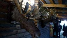 Рога и копыта: охотники и рыболовы показали томичам свои трофеи