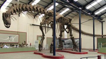 Реконструкция скелета аргентинозавра из музея патагонского города Неукен. Архивное фото