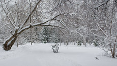 Заснеженный парк, архивное фото