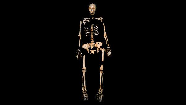 Скелет гейдельбергского человека, найденный в одной из пещер на севере Испании