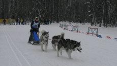В упряжке с громким лаем: гонка на собаках прошла в Самаре