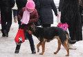 Бездомные собаки на улицах Великого Новгорода