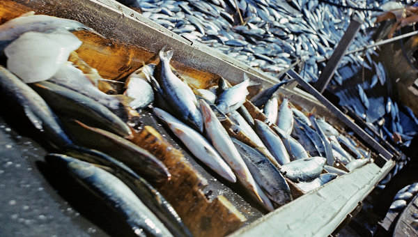 Рыбаки обрабатывают улов рыбы. Архивное фото