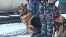 Медвежью лапу, пистолет и наркотики нашли таможенные собаки во Владивостоке