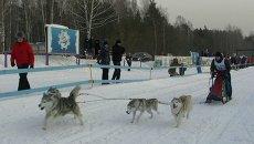 Хаски, лыжи и только вперед: в Томске впервые прошли гонки на собаках