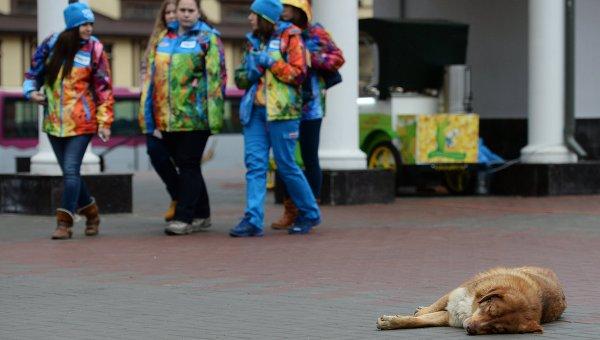 Собаки на улицах олимпийского Сочи, архивное фото