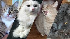 Кошки. Коллаж