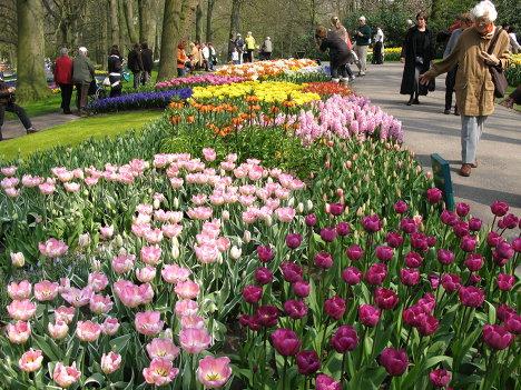 Цветочный парк в Нидерландах