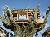 Ресторан на острове Окинава