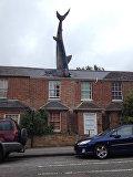 Акула на крыше дома в Оксфорде