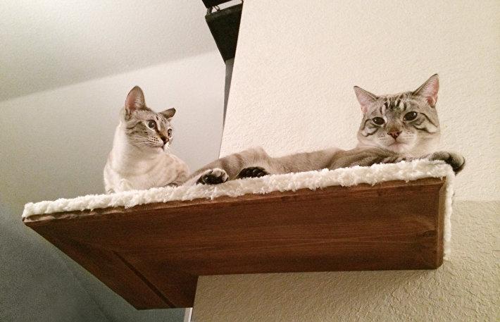 Звериная мебель: как обустроить в квартире жилплощадь для котиков